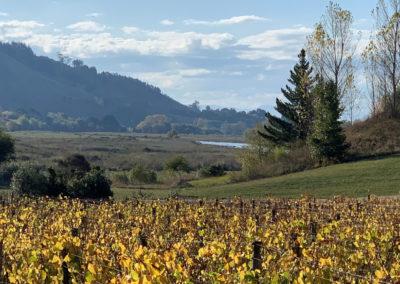 River House Autumn Vines